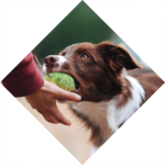 Dogs-Cool - basisschool