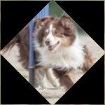 Dogs-Cool - vervolgopleidingen