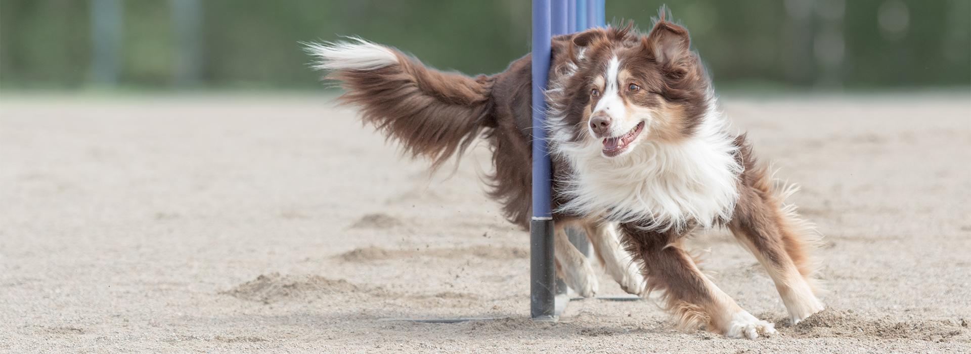 dogs-cool-vervolgopleidingen